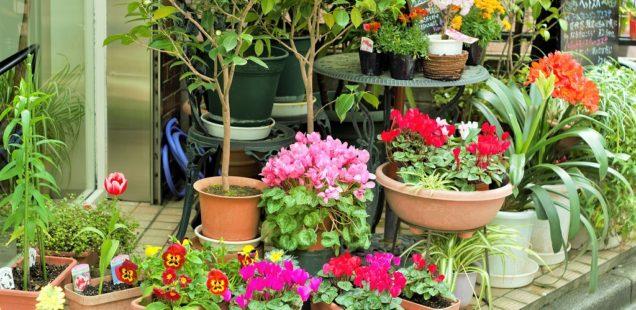 【三軒茶屋美容室】最近、前にも増して花屋と間違えられるMORIO