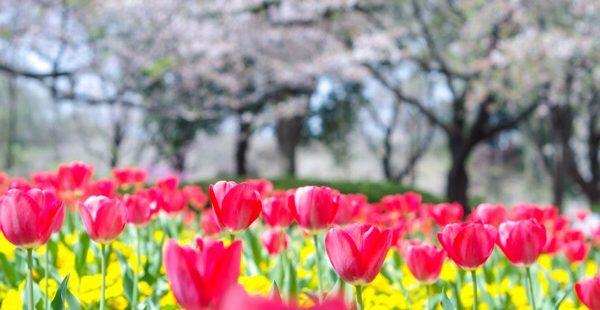 【大宮花の丘農林公苑】公園・花見スポットであり、子連れにとっての癒し空間過ぎた。