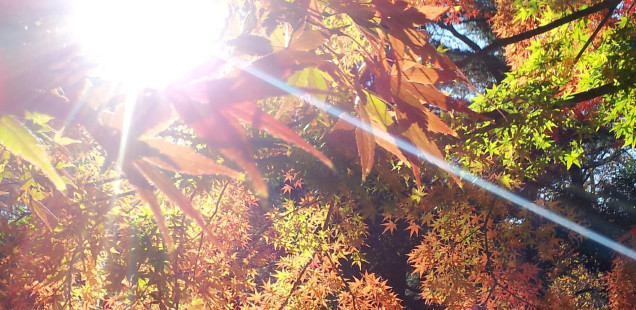 美しや、新宿御苑。