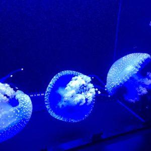 【世界一のクラゲの水族館】鶴岡の加茂水族館は山形にあるから行くべし