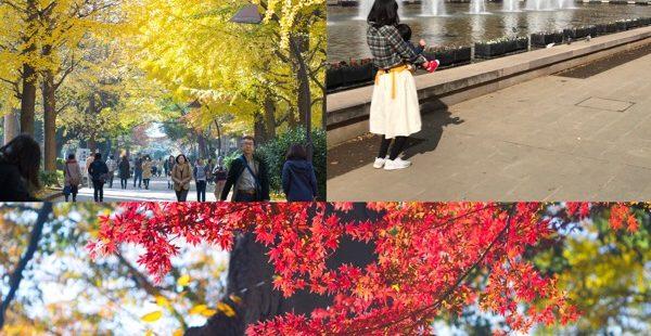 師走の忙しくなる前に…家族で上野公園にて紅葉。